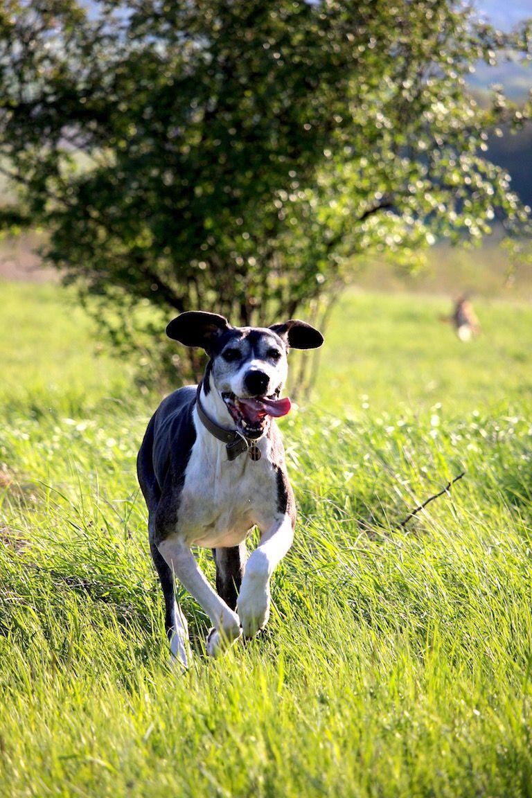 Amy fut a mezőn lobogó fülekkel