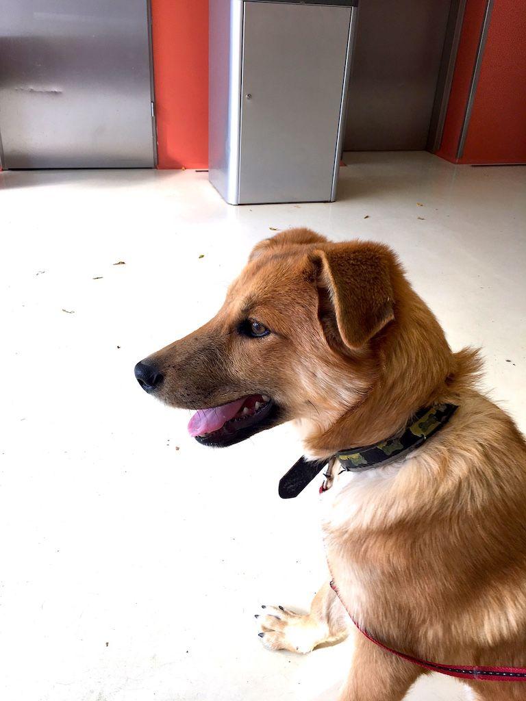 Edi kutya ül az orvosi váróban 1