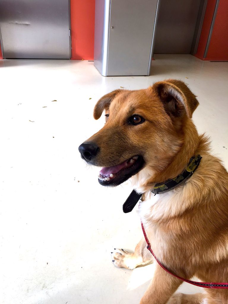 Edi kutya ül az orvosi váróban 2