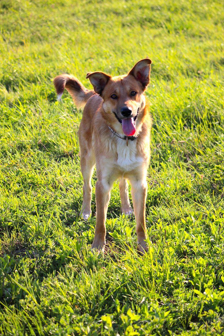 Edi kutya a zöld mezőn