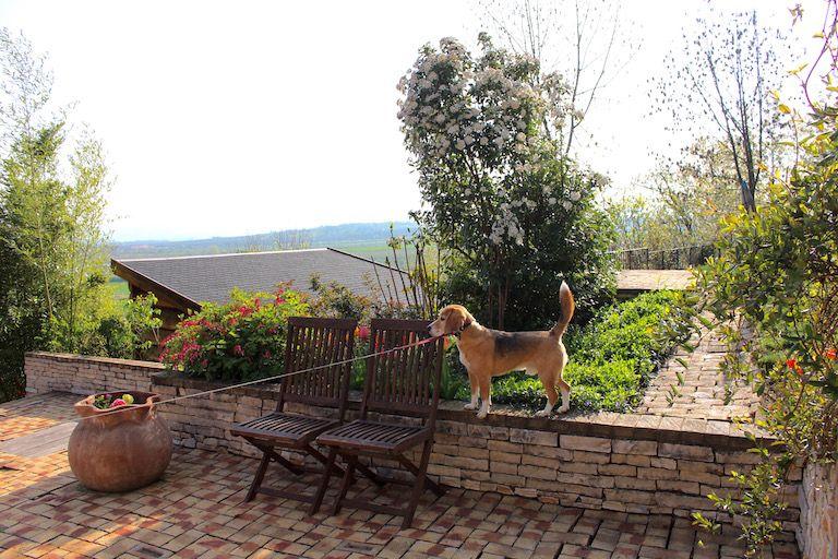 Egon áll a kőfalon a kertben