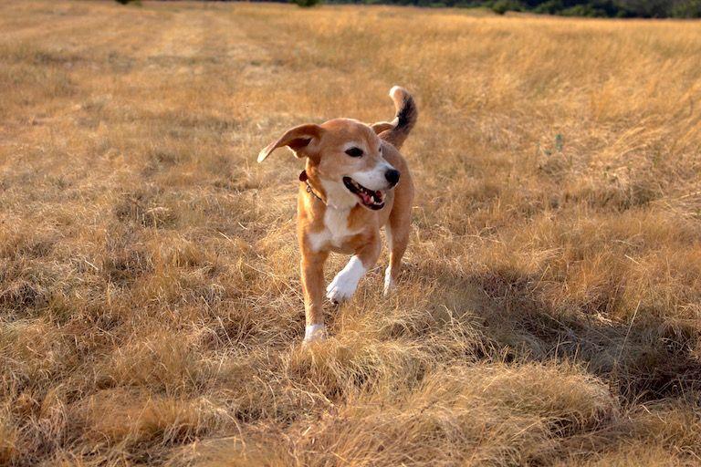 Egon fut a mezőn lobogó fülekkel