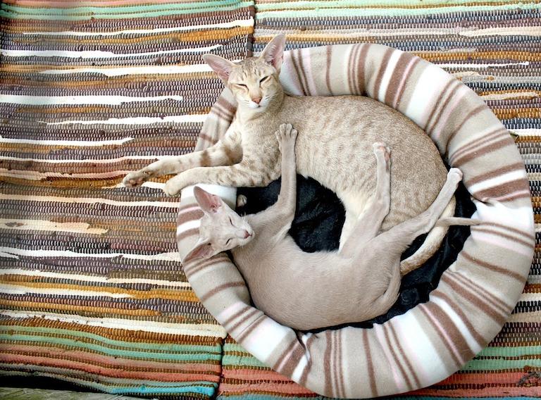 Két macska egy ágyban
