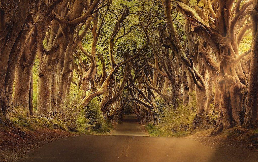 Erdő egy kissé félelmetes ösvénnyel