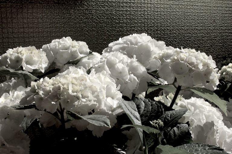 Kép 4: pillanatok, hortenzia, kék hortenzia, virágok