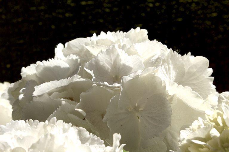 Kép 5: pillanatok, hortenzia, kék hortenzia, virágok