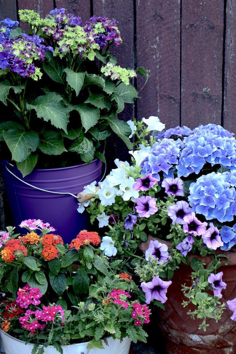 Kép 3: pillanatok, hortenzia, kék hortenzia, virágok
