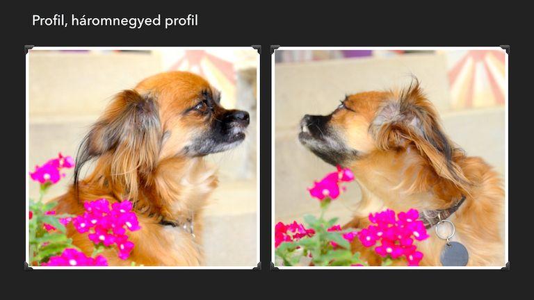 Kép 5: Sissi, A Banda, kutyáink
