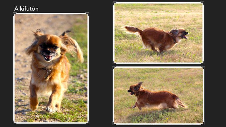 Kép 6: Sissi, A Banda, kutyáink