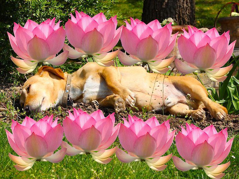 Kép 1: A Banda, Tacsi, TacsiZen, zen, nyugalom, feszültség, kaja, kutyáink