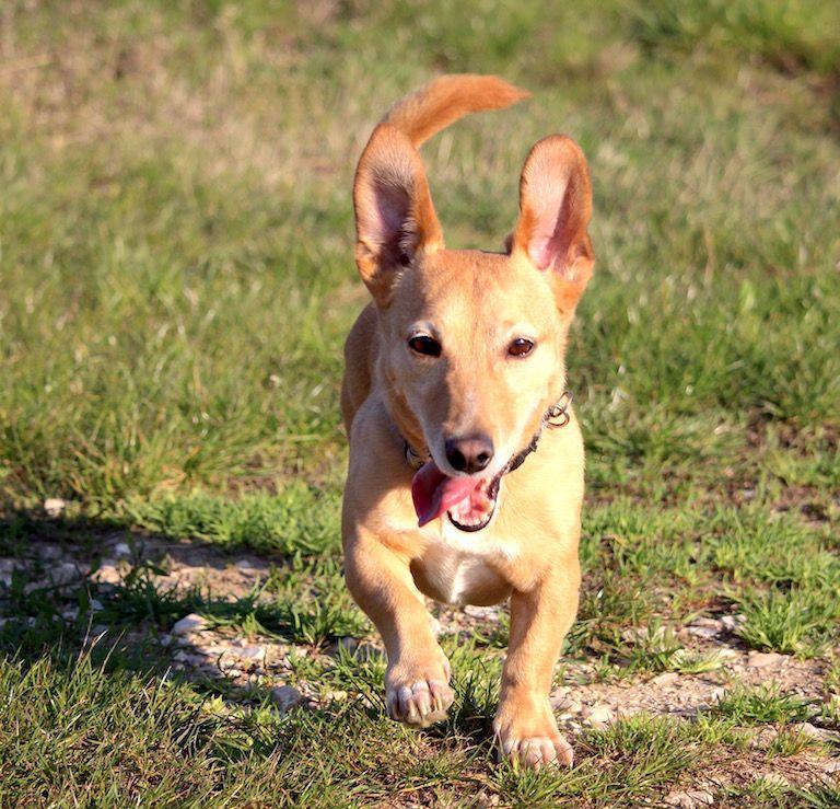 Kép 3: A Banda, Tacsi, TacsiZen, zen, nyugalom, feszültség, kaja, kutyáink