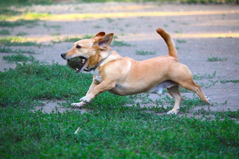 Kép 2: A Banda, Tacsi, kutyaboldogság, boldog kutya, kutya életigazságok, kutyáink