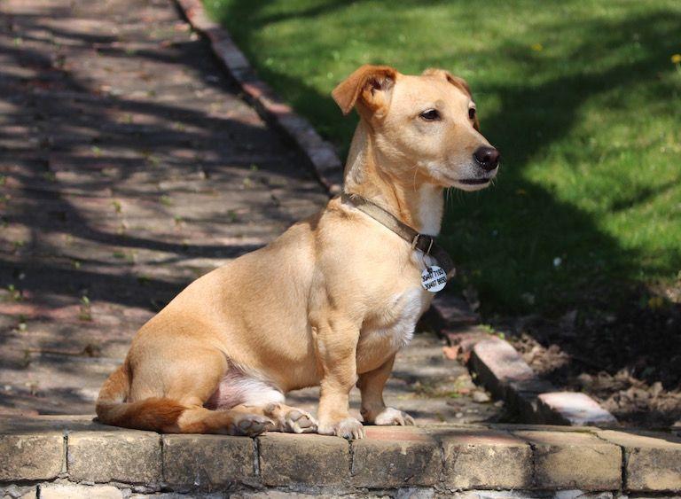 Kép 1: A Banda, Tacsi, kutyaboldogság, boldog kutya, kutya életigazságok, kutyáink